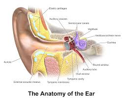Professional Voice Blog - What is Ear Wax and how NOT to Clean Your Ears