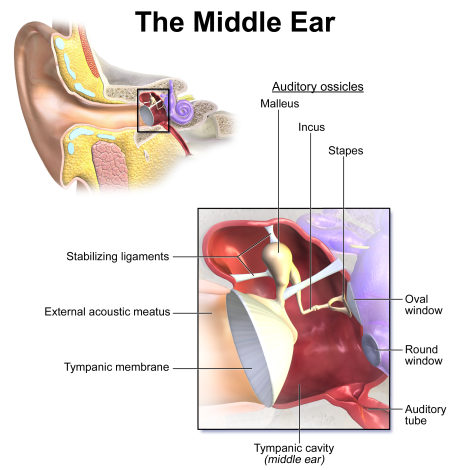 Professional Voice Blog - Airplane Ear